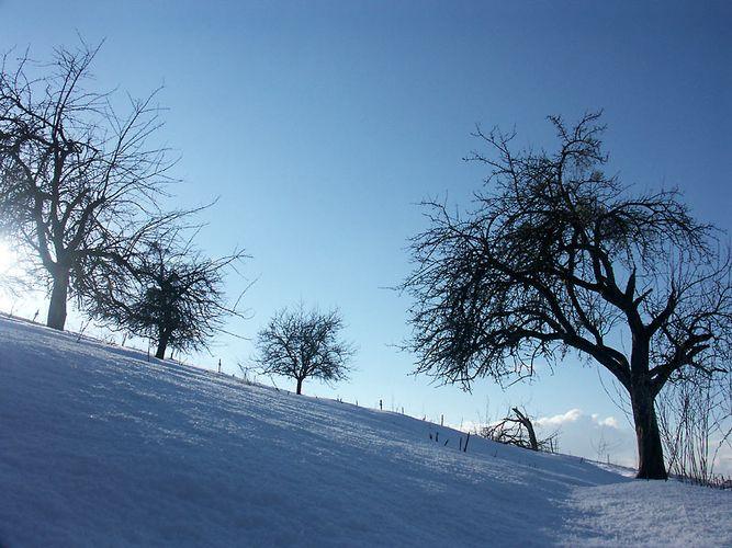 Winter in der Streuobstwiese
