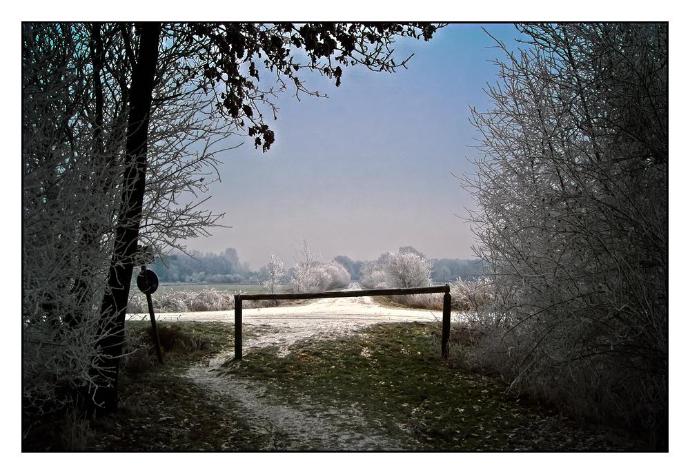 Winter in Diepholzer Moor.