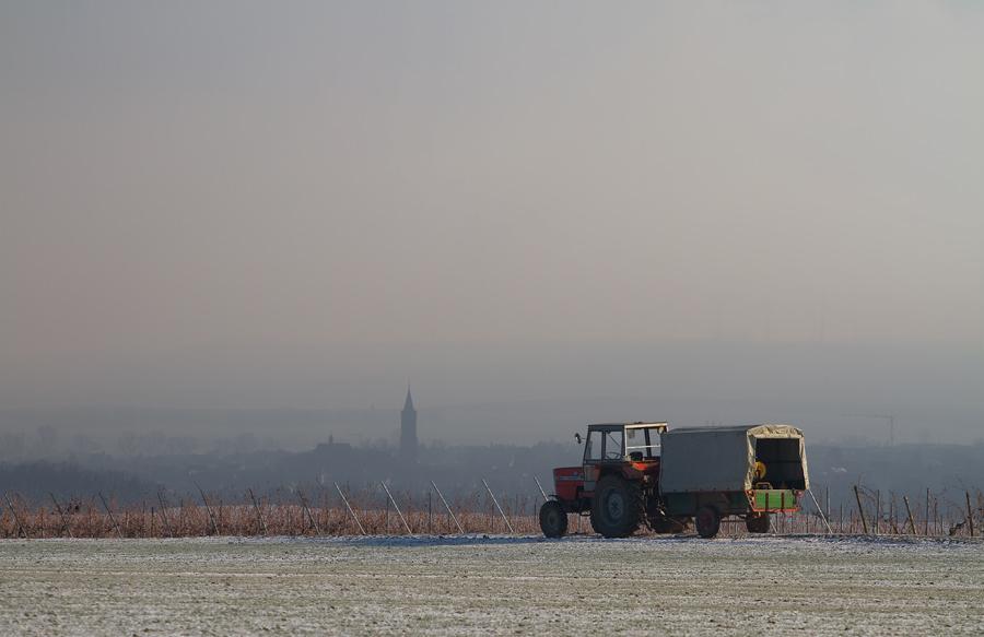 Winter in Rheinhessen