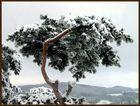 Winter in Sachsen II