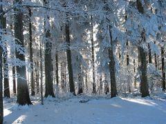 Winter in St.Gallen