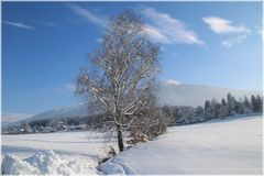 Winter in Tirol ( Bild 2 )