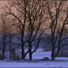 Winter in Wienerwald