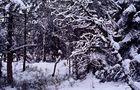 Winter ist's geworden 3