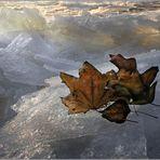 « Winter Leaves »