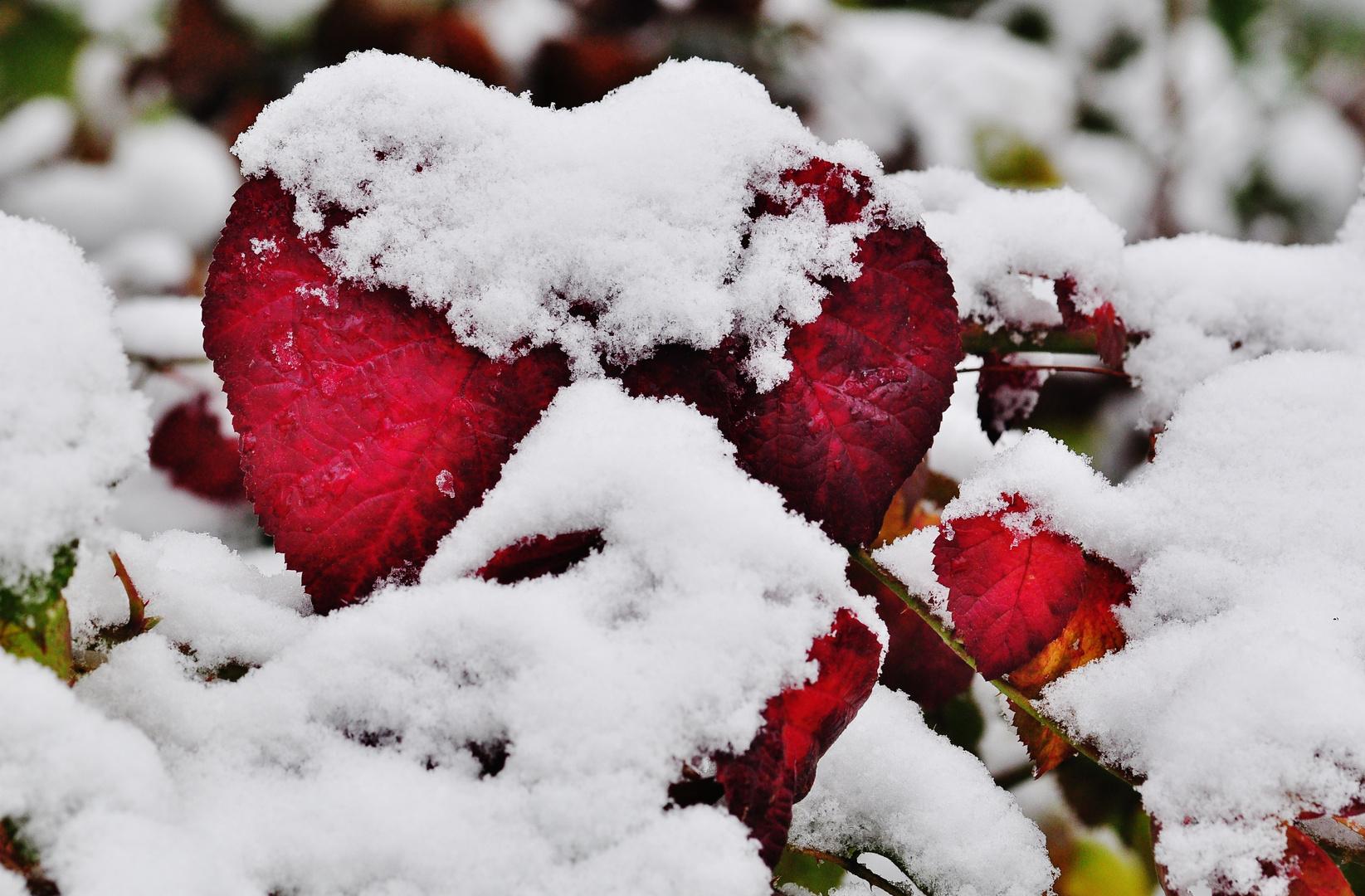 Winter Love Foto Bild Pflanzen Pilze Flechten Pflanzen Im