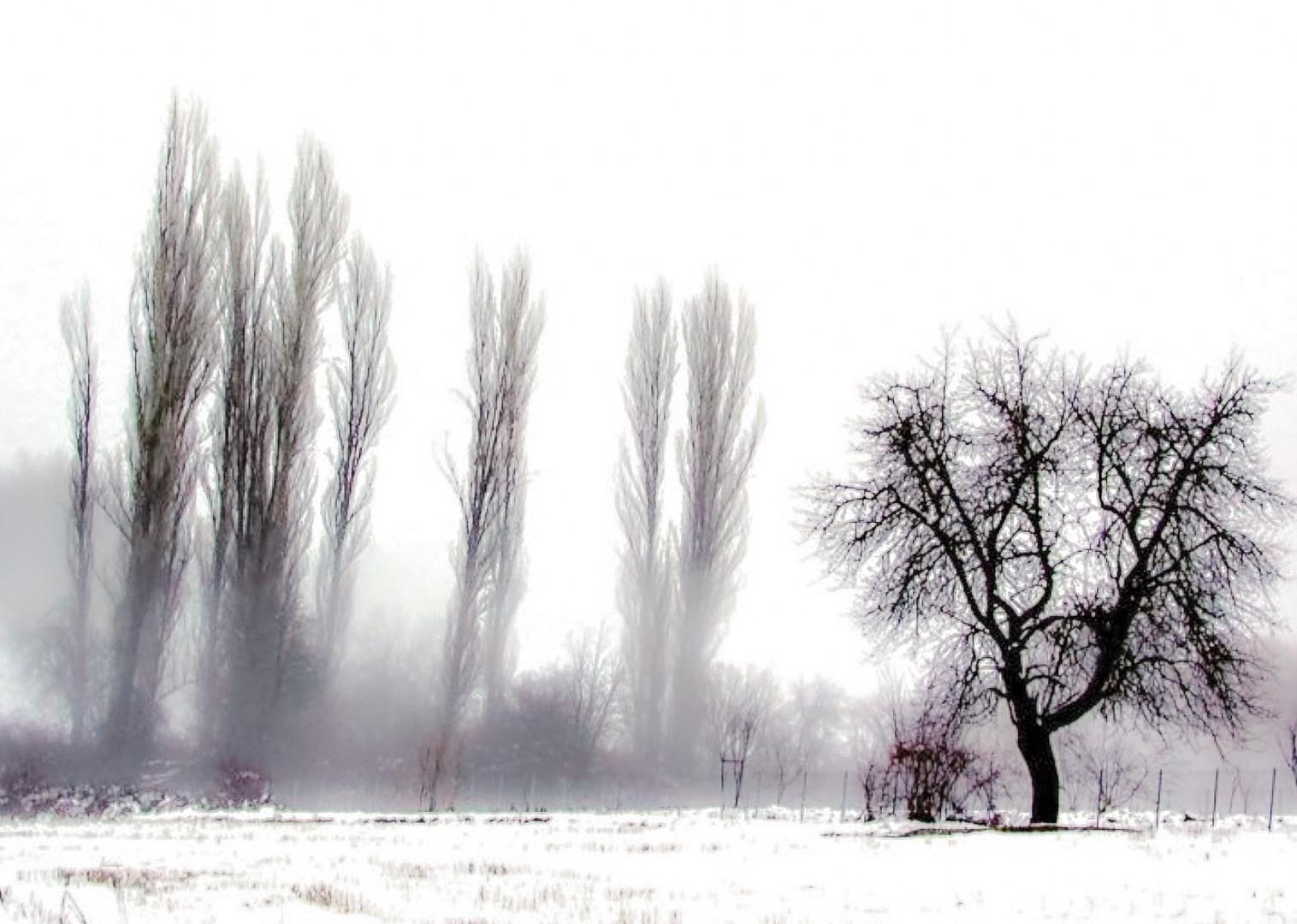 Winter mist in my garden, 2016...