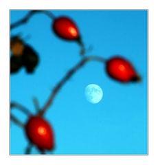 Winter moon - Wintermond