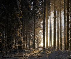 Winter Morgen II