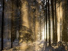 Winter Morgen  IV