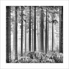 Winter-Nebel-Bäume