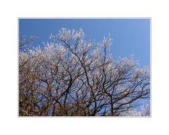 Winter oder Frühling #2