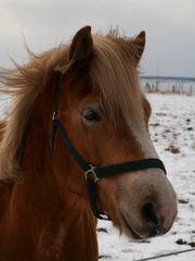 Winter-Pferd