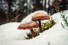 Winter-Pilze