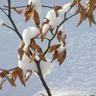 Winter / Poland