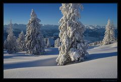 Winter pur!
