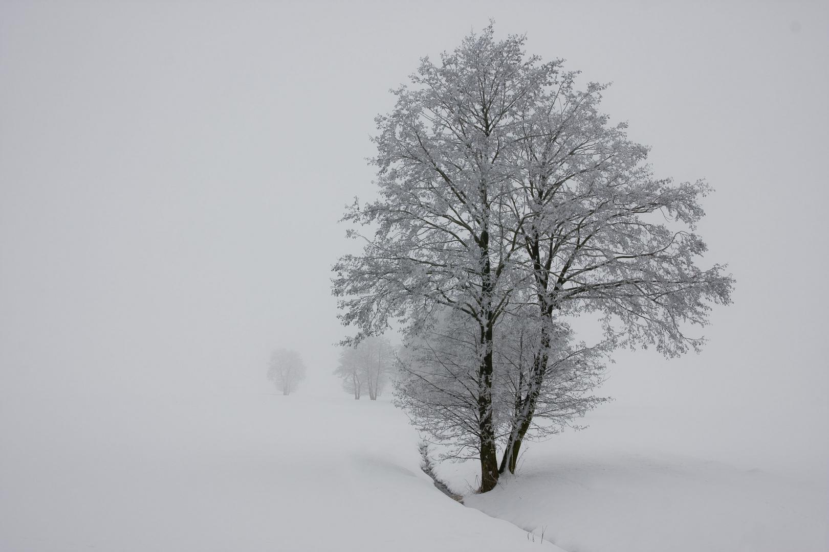 Winter puristisch