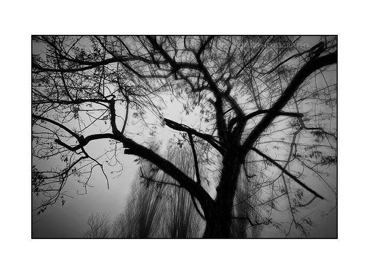 Winter Quiet 2