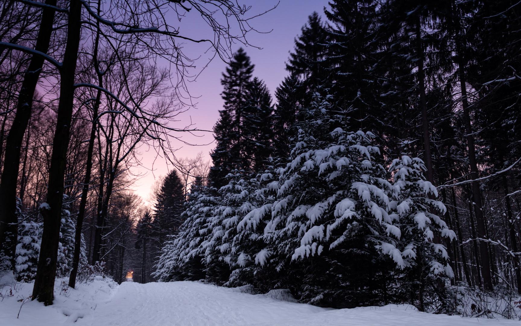 winter scenery // Chemnitz - Zeisigwald