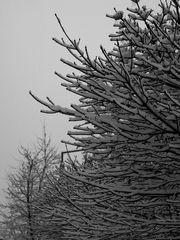Winter-Schlaf