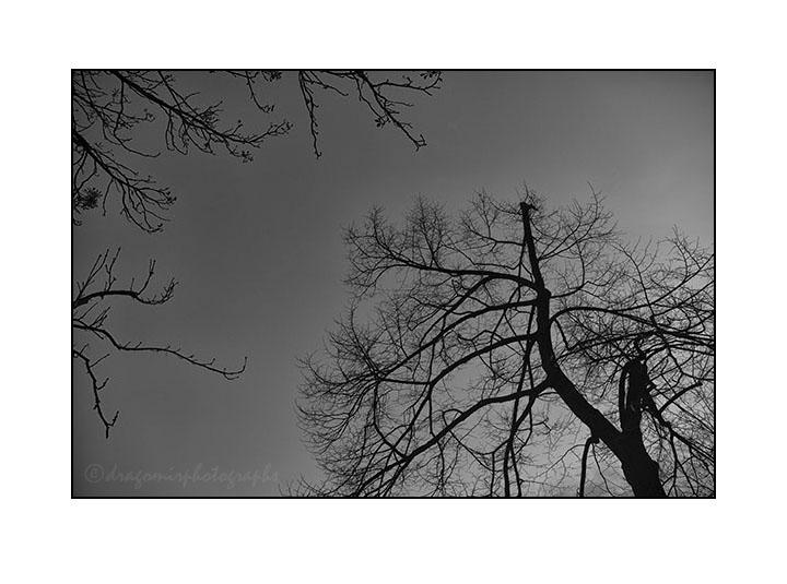 Winter Silence 2