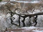 Winter Sonntag am See 3