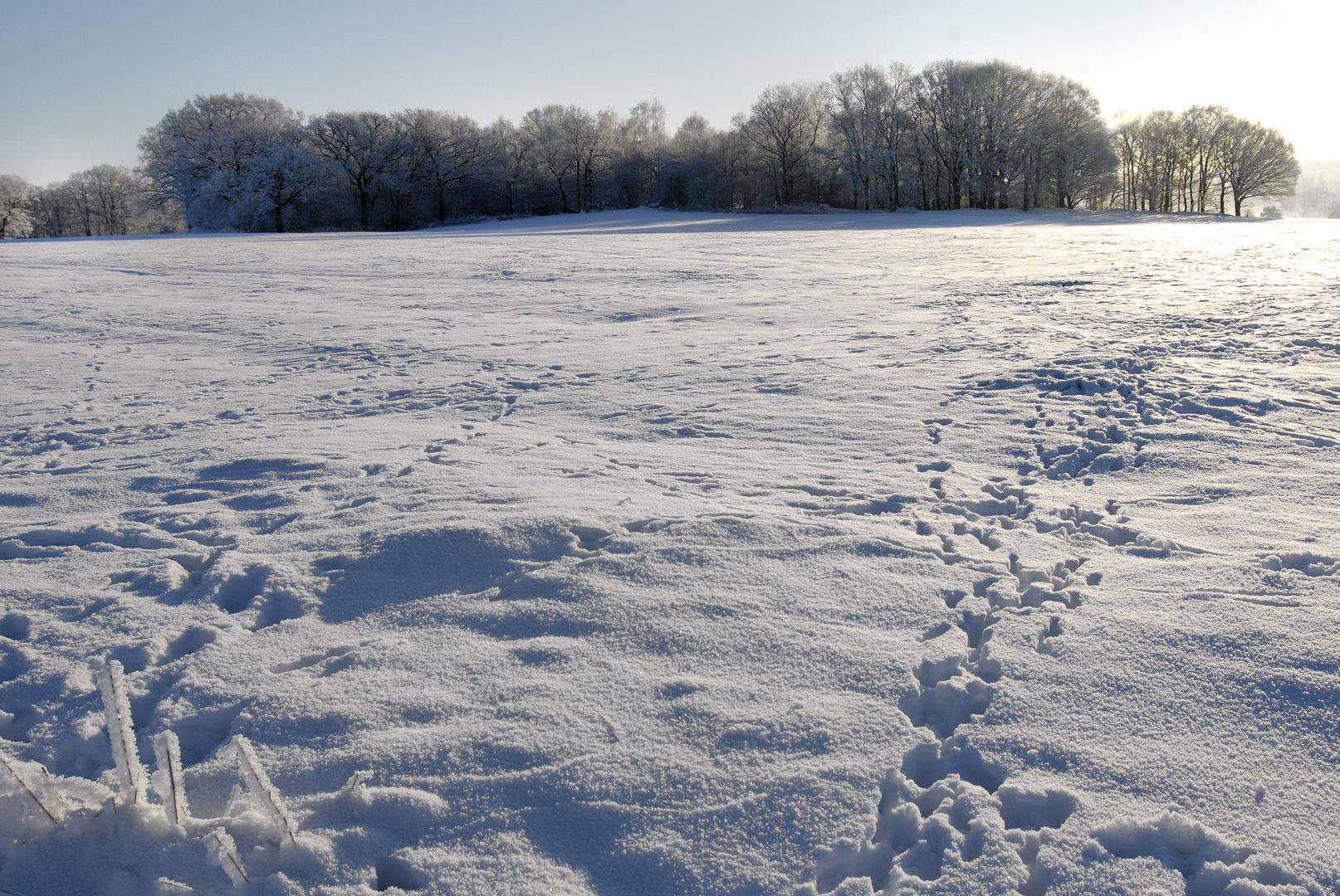 Winter-Spuren