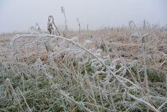 Winter Stilleben