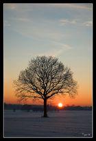 Winter Sunlight II