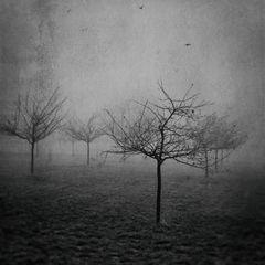 winter trees III.2