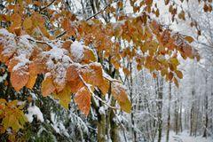Winter trifft auf Herbst....