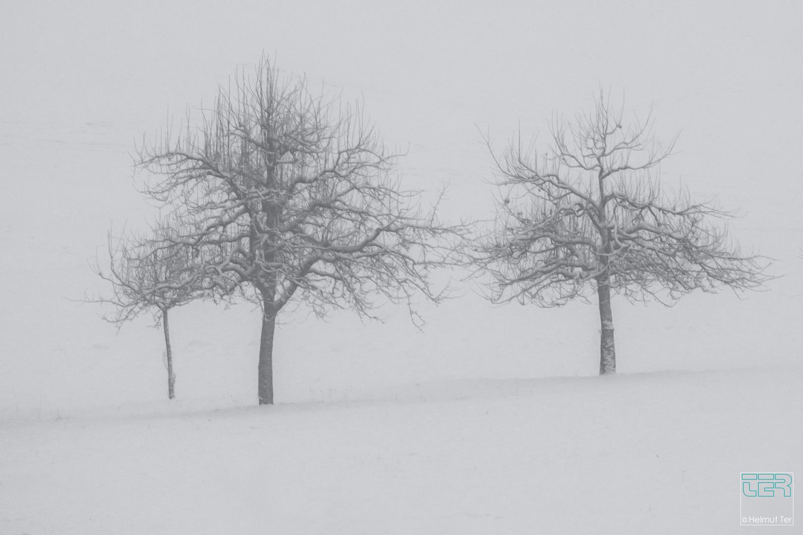Winter-Tristesse