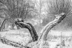 Winter und kein Ende ...
