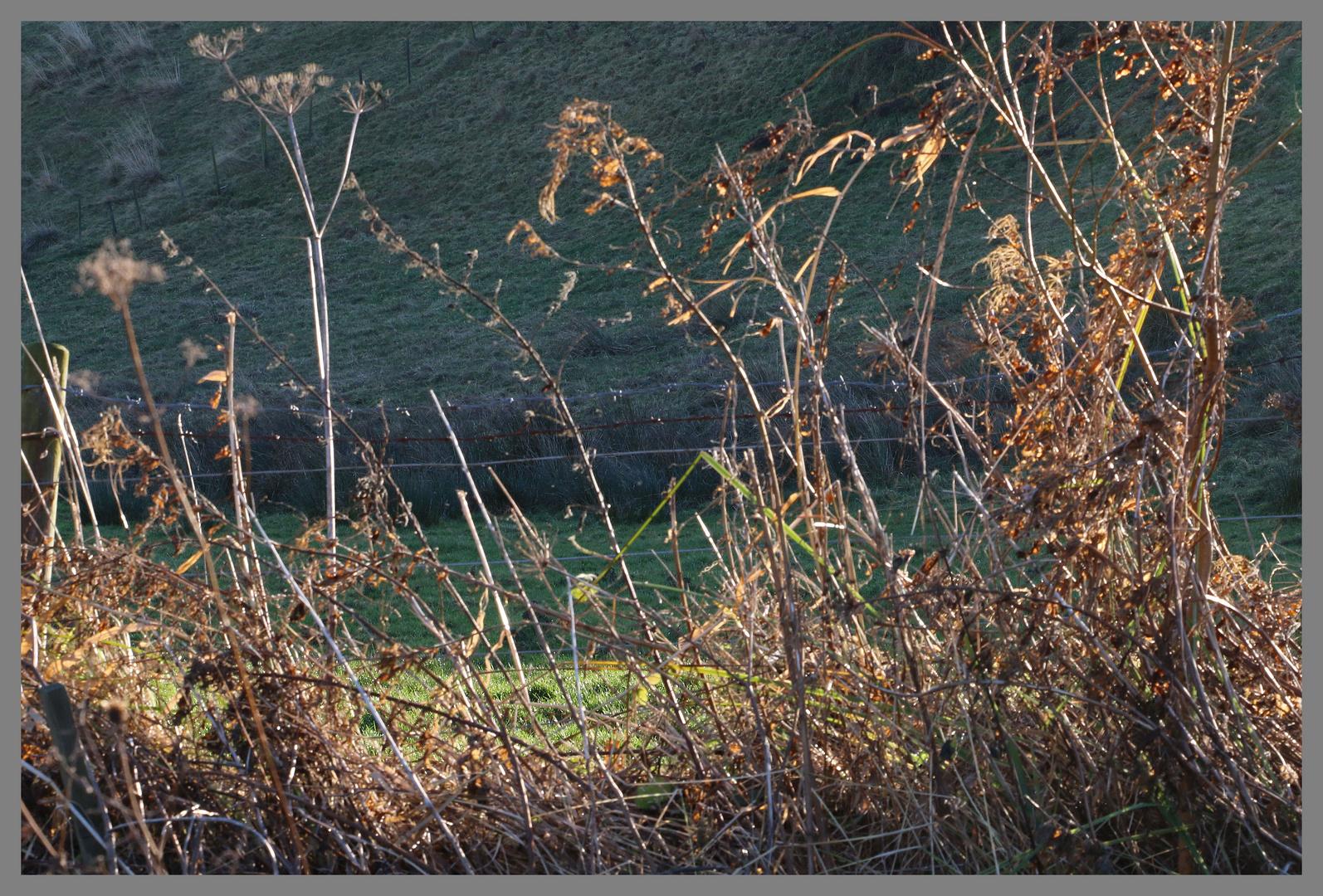 winter verge near great tosson Northumberland