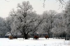 Winter vor einem Jahr