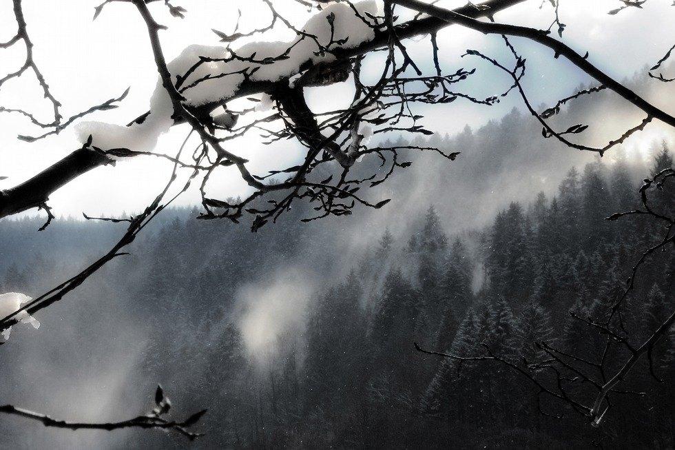 Winter Wald ####