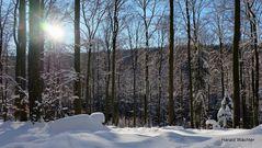 Winter-Wald-Wanderung II