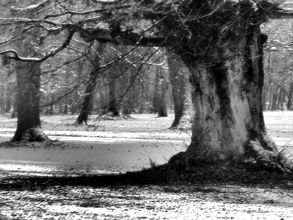 Winter Walk 3b