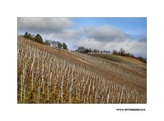 Winter Wein Berg