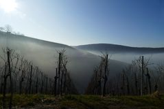 Winter-Weinberg-Landschaft