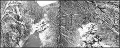 Winter-Wildnis an der Sihl