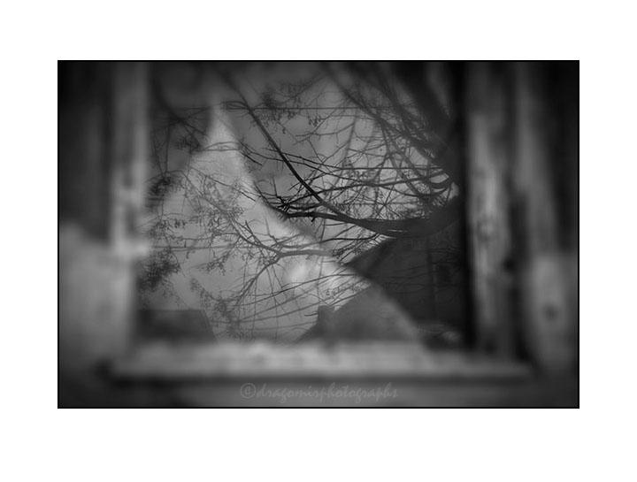 Winter Window One 5