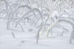 Winter - ZAUBER