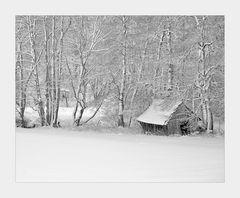 Winter - ZAUBERwald