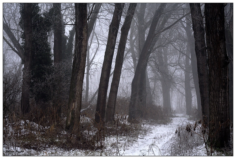 Winter/2