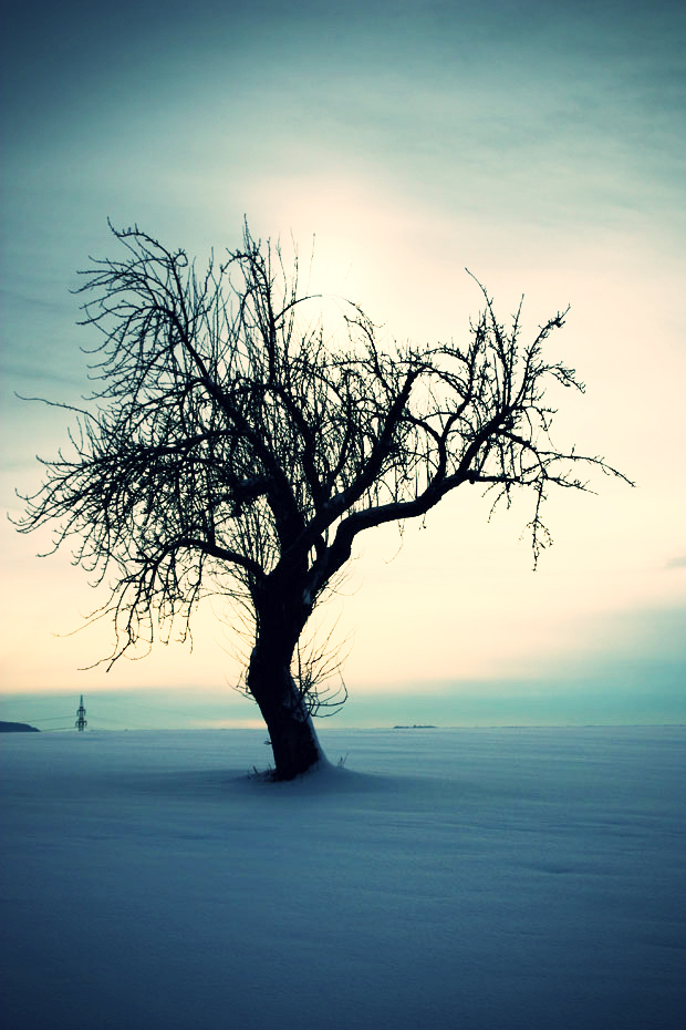 Winter2010/11