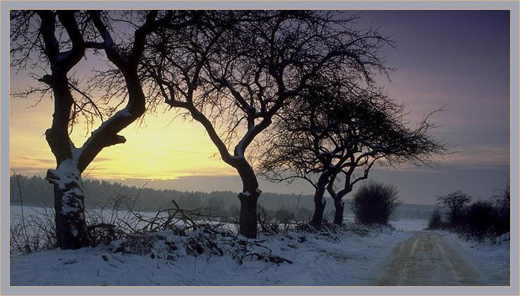 Winterabend in der Schorfheide