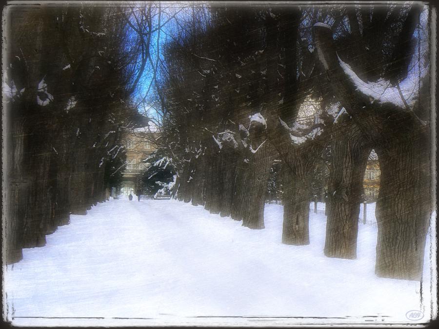 Winterallee...