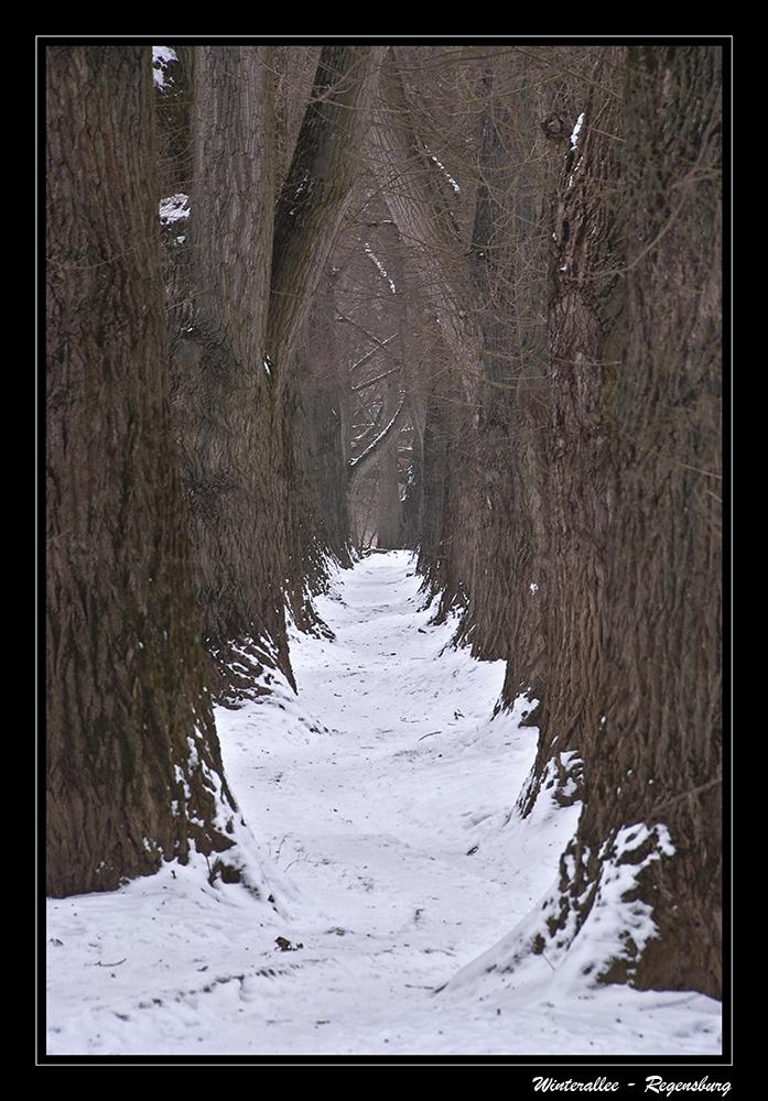 Winterallee - Regensburg