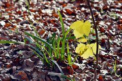 *Winteranfang 2014* --- ha-ha --- Junge Triebe im Wald.